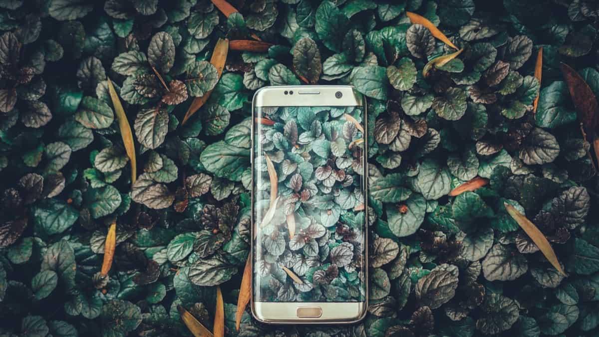 Algorithmen für eine bessere Welt: Nachhaltigkeits-Apps